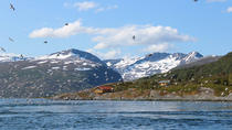 Sea birds seals and Museum visit included Zodiac tour, Tromso, Night Cruises