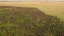 10-Day Great Wildebeest Migration Safari Guided Tour through Tanzania, Arusha, Safaris