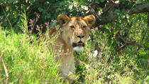 6-Day Safari in Tanzania's Northern Parks, Arusha, null
