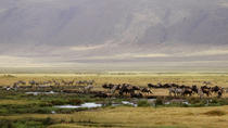 Full-Day Ngorongoro Crater Tour from Arusha, Arusha, Day Trips