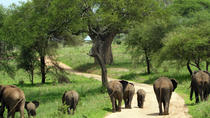 Full-Day Safari in Tarangire National Park, Arusha, Day Trips
