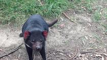 South East Food, Sightseeing Private Tour with the Tasmanian Devil Unzoo, Hobart, null