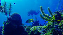 SCUBA Diving Tour at Roatan's North Shore, Roatan, Scuba Diving