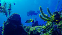 Small-Group Diving Trip in Roatan, Roatan
