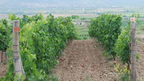 Private Half-Day Tour of Bulgarian Wine Country, Plovdiv, Wine Tasting & Winery Tours