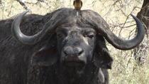 Kenya and Tanzania Safari, Nairobi, 4WD, ATV & Off-Road Tours