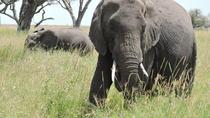 Serengeti 2-Day Safari from Mwanza, Tanzania, Multi-day Tours