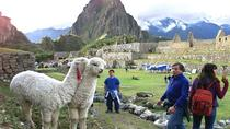 15-Day Peru Tour from Lima Including Paracas, Arequipa and Puno, Lima, Multi-day Tours