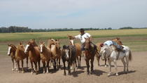 Ranch trip with private driver, Buenos Aires, Private Day Trips