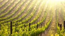 Small-Group Champagne Tour from Paris Including 4-course Lunch, Paris, Day Trips