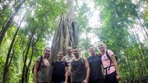 6-Hour Doi Pui Summit Hike in Doi Suthep National Park from Chiang Mai, Chiang Mai, Hiking & Camping