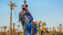 Half-Day Camel Ride in the Rock Desert And Palm Grove from Marrakech, Marrakech, Half-day Tours