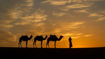 Private Tour 11 Days from Casablanca to Imperial Cities And Sahara Desert, Casablanca, Private...