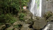 El Yunque Rainforest and Luquillo Beach Small-Group Tour, San Juan, Half-day Tours