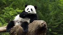 Beijing Zoo Panda House and Summer Palace Private Tour, Beijing, Nature & Wildlife