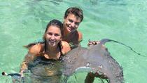 Punta Cana Parasailing Adventure with Shark and Stingray Encounter , Punta Cana, Parasailing &...