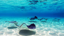 Punta Cana Shark and Stingray Encounter by Glass Bottom Boat, Punta Cana, Glass Bottom Boat Tours