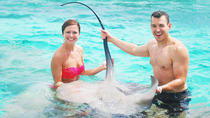 Sharks and Stingray Adventure by Speed Boat from Punta Cana, Punta Cana, Day Cruises