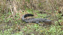 1-hour Airboat Tour on Lake Panasoffkee, Orlando, Airboat Tours