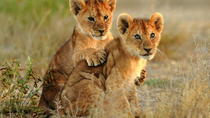 3-Day Kruger Explorer Safari from Johannesburg, Johannesburg, Multi-day Tours