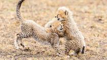 De Wildt Endangered Wildlife Centre, Johannesburg, 4WD, ATV & Off-Road Tours
