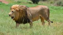 Rhino & Lion Park, Johannesburg, Day Trips
