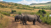 Sun City & Pilanesberg Game Reserve (Closed Vehicle), Johannesburg, Day Trips
