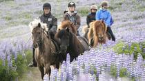 Full Day Horse Riding and Glacier River Rafting from Reykjavik, Reykjavik, Horseback Riding