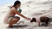 Spanish Wells Pigs Excursion, Nassau, Day Trips