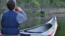 Beaver Safari by Canoe in Svartadalen, Central Sweden, Kayaking & Canoeing