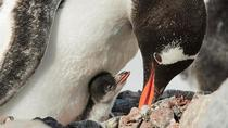 Magdalena & Marta Islands Excursion by 16-passenger boat, Punta Arenas, Day Trips