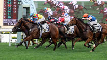 Chinese New Year Horse Racing Tour in Hong Kong, 香港