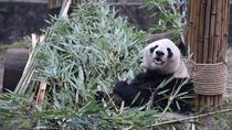One Day Panda Keeper Volunteer in Dujiangyan, Chengdu, Bus & Minivan Tours