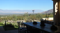 Exclusive day-long private tour of Cafayate vineyards, Salta, Day Trips