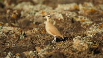 Bird Watching Guided Half-Day Tour from Lanzarote