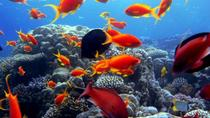 Day Tour to Sharm El Naga Beach for Snorkeling from Hurghada, Hurghada, Snorkeling