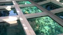 Glass Bottom Boat Tour from Sharm El Sheikh, Sharm el Sheikh
