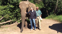 Close Encounter with African Elephants including 'Trunk in Hand' Walk in The Crags, Garden Route