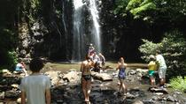 Excursão privada: passeio de um dia na floresta tropical e cachoeiras saindo de Cairns, Cairns & the Tropical North, Private Sightseeing Tours