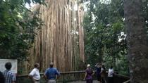 Rainforest and Waterfall Day Trip from Cairns Including Crater Lakes, Millaa Falls and Zilliee ...