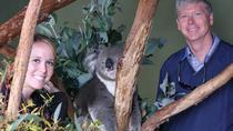 Hobart Highlights: Bonorong Wildlife Sanctuary and Mt Wellington