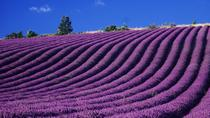 Private Tour to Valensole Moustiers Sainte Marie Lac de Sainte Croix from Avignon, Avignon