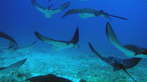 5-Day Galapagos Diving Tour: Accommodation and Full-Day Diving Excursions, Galapagos