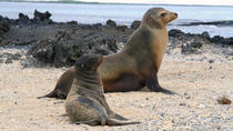 5-Day Galapagos Land Tour: Magic of Isabela Including Santa Cruz, Galapagos Islands, Multi-day Tours