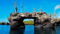 6-Day Galapagos Land Tour: Los Tuneles Program, Galapagos Islands, Multi-day Tours