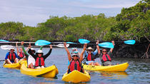 8-Day Galapagos Adventure: San Cristobal, Santa Cruz, Isabela Island, Galapagos Islands, Multi-day ...