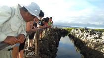 Half-Day Tour to Tintoreras Islet in Isabela Island - Galapagos, Galapagos Islands, Day Trips