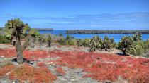 North Seymour Day Trip Galapagos - Includes Hotel Pick-up, Galapagos Islands, Day Trips