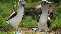 8-Day Tour of Quito and Galapagos Islands, Quito, Multi-day Tours