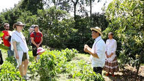 Full-Day Private Colombian Coffee Tour Filandia and Salento from Armenia, Armenia, Day Trips